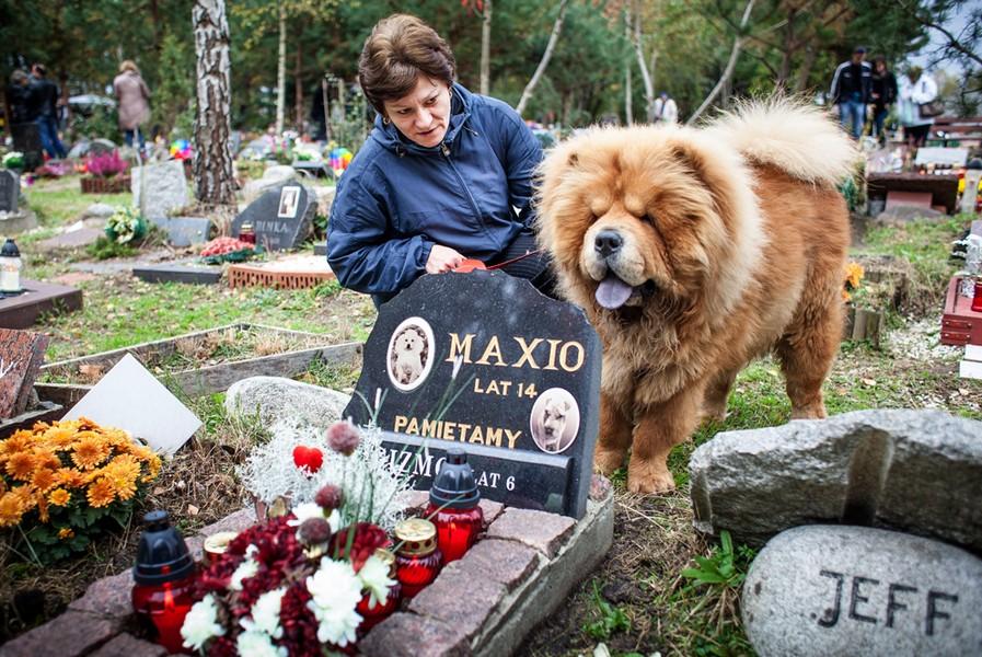 известно чем можно ли хоронить собак на человеческом кладбище движения автобуса ВСЕ